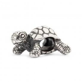Afrikaanse schildpad TAGBE-20049